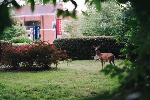 Campus just doesn't feel the same during Fall Break. We miss your de(e)rly, #Spiders! ❤️💙🦌