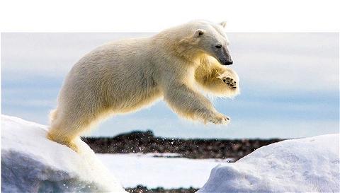 Bonne journée internationale de l'ours polaire ! ❄️(Oui c'est vrai qu'on est dans une vibe très écolo mais après tout c'est important 🌱)