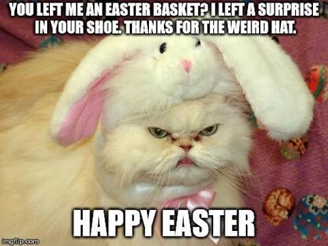 On vous souhaite de passer une meilleure journée de pâques que ce chat ! 😂 🥚 🍫 🐇 🎉